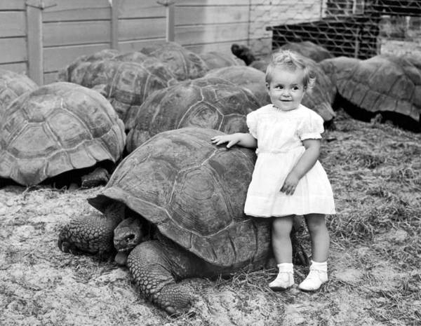 Tortoise Shell Photograph - A Young Girl Leans On A Tortoise by Underwood Archives