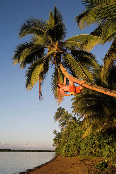 Scaling Photograph - A Young Man Climbs Up A Leaning Palm by Michael Hanson