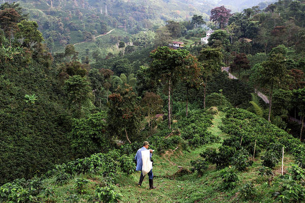 Manizales Photograph - A Young Man Walks Down A Ridge by Modoc Stories