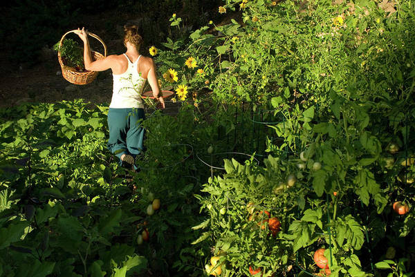 Lake George Photograph - A Young Woman Gathers Vegetables by Kyle George