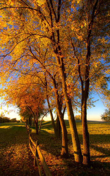 Photograph - Aahctober by Phil Koch
