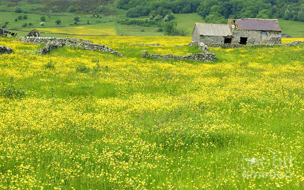 Photograph - Abandoned In Yellow by David Birchall