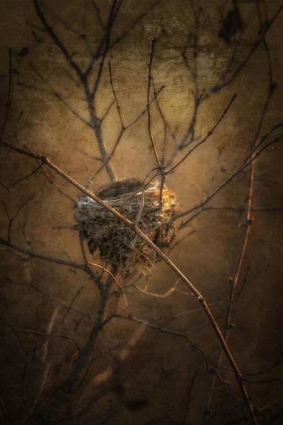 Empty Nest Wall Art - Photograph - Abandoned by Tom Climes