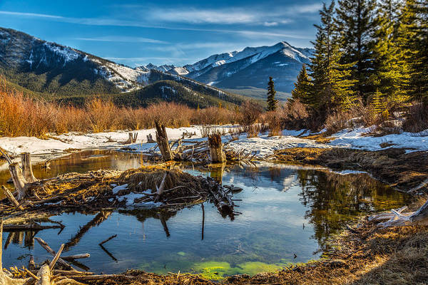 Photograph - Abandoned Trunks In Vermillion Lakes by Levin Rodriguez
