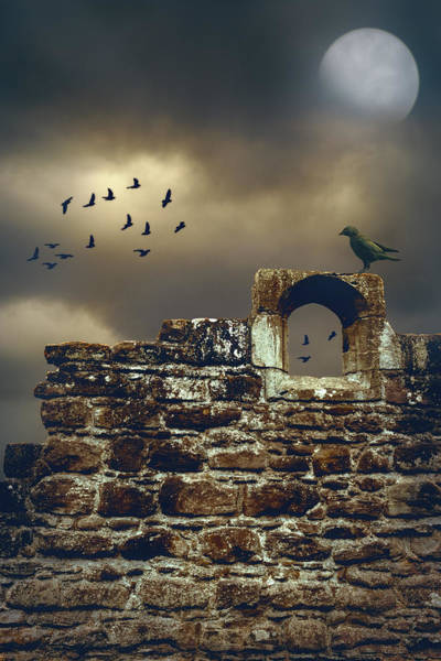 Rook Photograph - Abbey Wall by Amanda Elwell