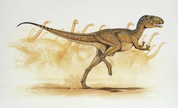 Wall Art - Photograph - Abelisaurus Dinosaur by Deagostini/uig/science Photo Library
