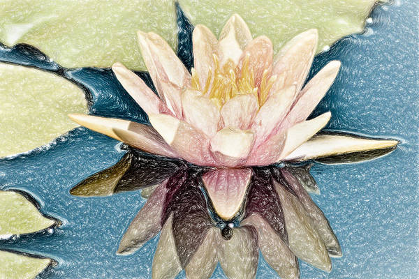 Wall Art - Mixed Media - Abigail's Water Lily by Trish Tritz