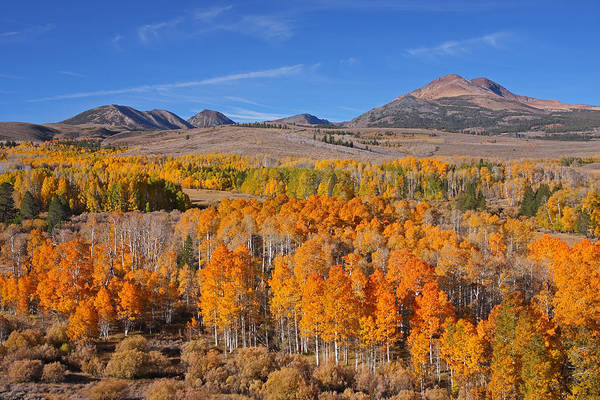Photograph - Ablaze With Color by Steve Wolfe
