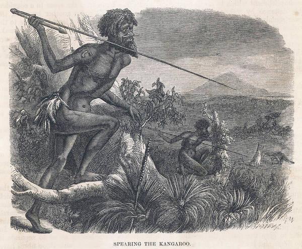 Kangaroo Drawing - Aboriginals Hunting Kangaroo by Mary Evans Picture Library