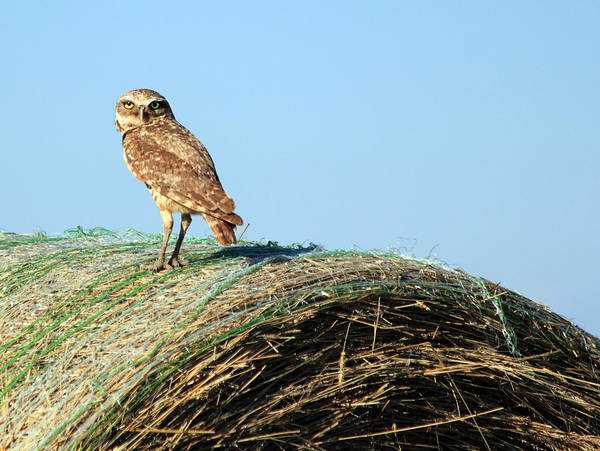 Photograph - About To Bale by Shane Bechler