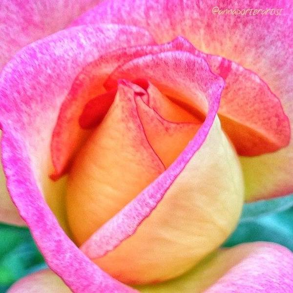 Romantic Wall Art - Photograph - About To Unfold by Anna Porter