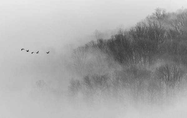 Misty Photograph - Above Mist by ??????? / Austin