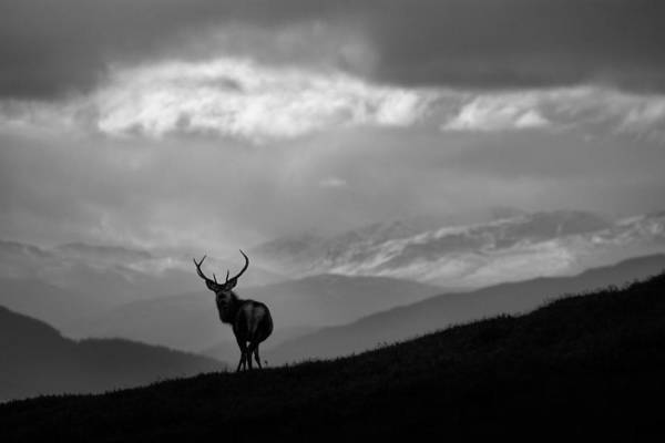 Photograph - Above The Glens by Gavin Macrae