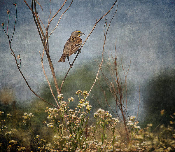 Wall Art - Photograph - Above The Prairie by Dale Kincaid