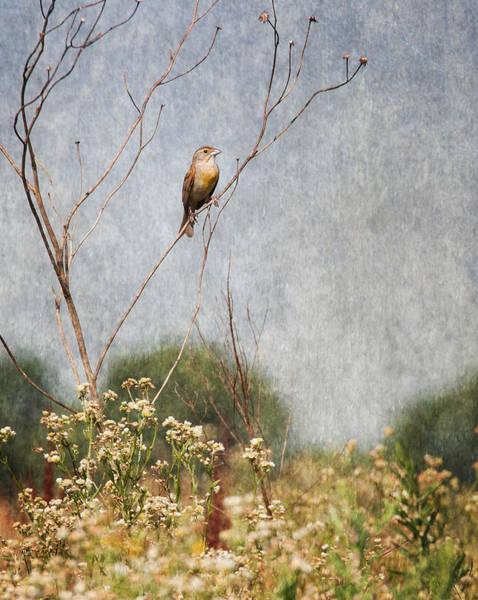 Wall Art - Photograph - Above The Prairie II by Dale Kincaid