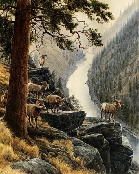 Bighorn Sheep Wall Art - Painting - Above The River by Steve Spencer