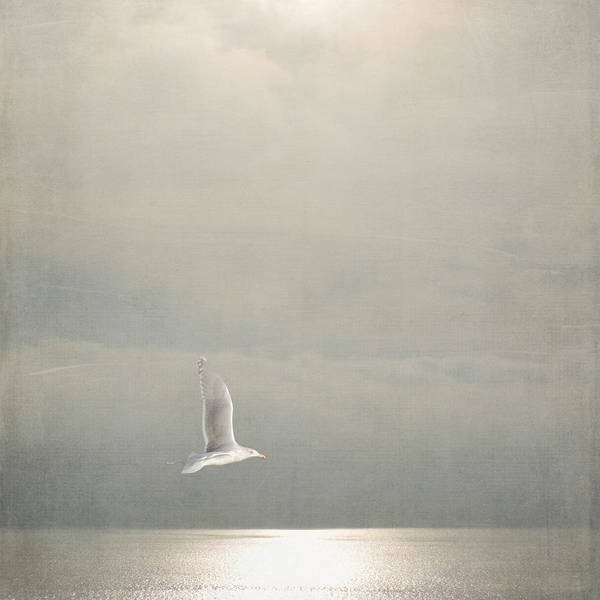 Photograph - Above The Sea by Sally Banfill