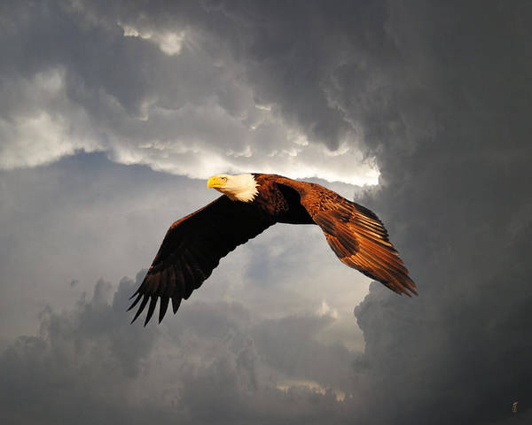 Flying Eagle Photograph - Above The Storm by Jai Johnson