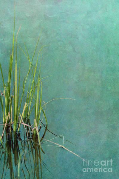 Wall Art - Photograph - Absolute Silence by Priska Wettstein
