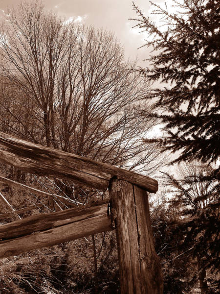 Photograph - Absolutely Wood by Alessandro Della Pietra