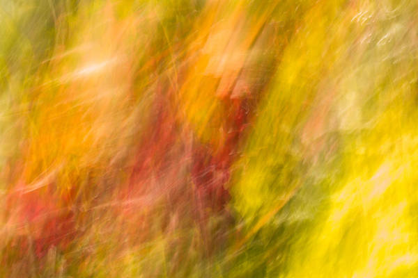Photograph - Abstract 10 by Steve DaPonte