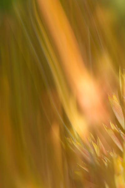 Photograph - Abstract 13 by Steve DaPonte