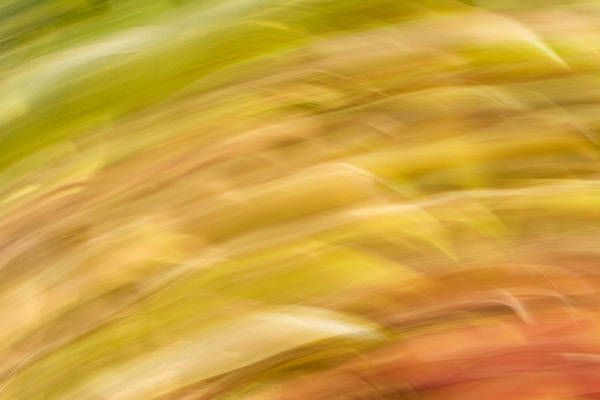 Photograph - Abstract 15 by Steve DaPonte