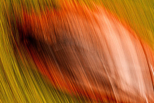 Photograph - Abstract #5 by Steve DaPonte