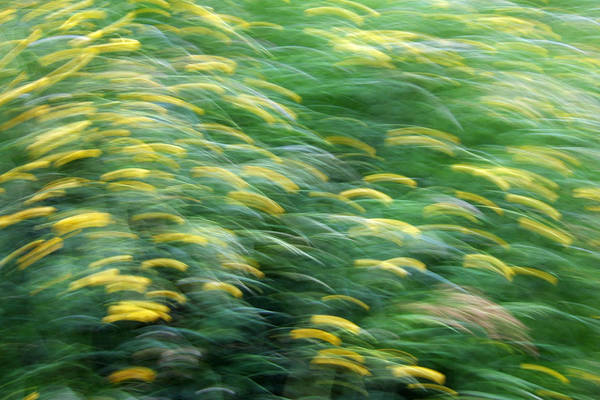 Photograph - Abstract Blurred Flower Meadow In Spring by Matthias Hauser