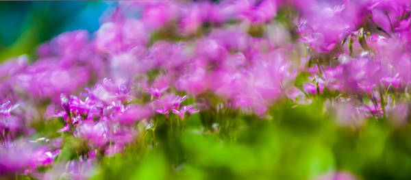 Photograph - abstract Blurry pink flower background for backgrounds by Alex Grichenko