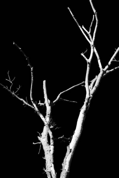 Photograph - Abstract Branches by Maggy Marsh