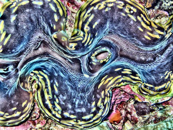 Reef Diving Digital Art - Fluted Giant Clam by Roy Pedersen