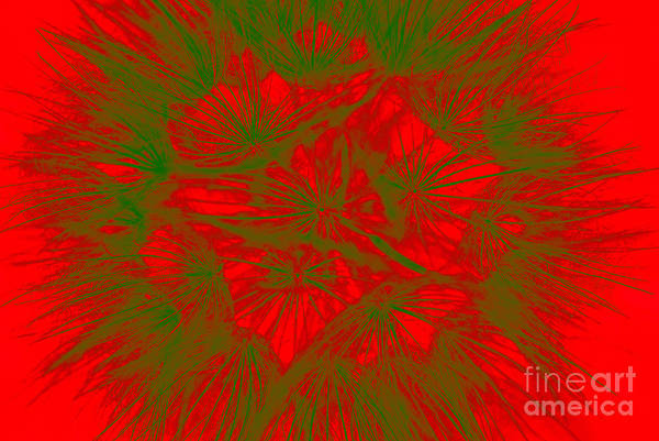Photograph - Abstract Dandelion Bloom by Mae Wertz