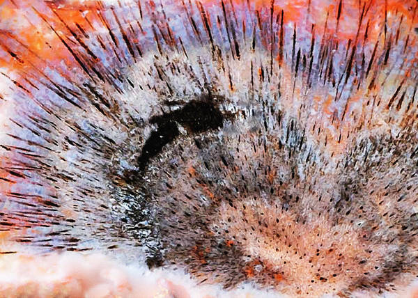 Painting - Abstract Explosion In Acrylic by Bob and Nadine Johnston