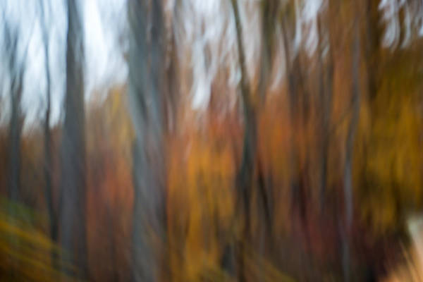 Photograph - Abstract Fall 13 by Joye Ardyn Durham