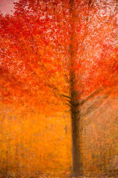 Photograph - Abstract Fall 19 by Joye Ardyn Durham