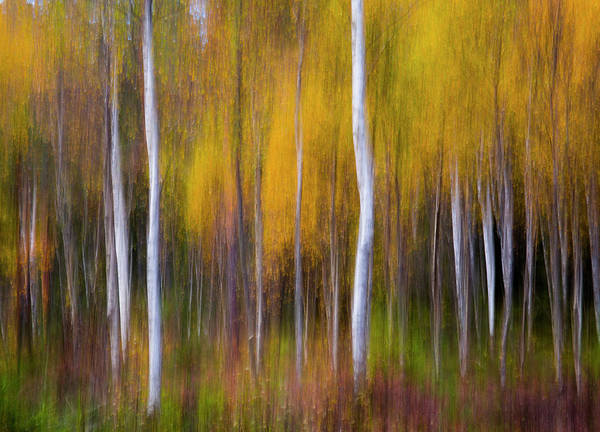 Woods Photograph - Abstract Fall by Andreas Christensen