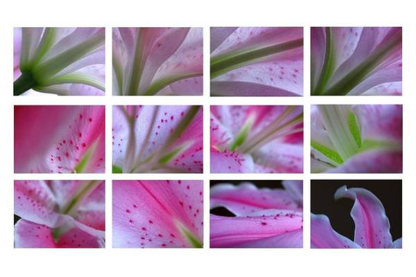 Photograph - Abstract Flower Fine Art Photography by Juergen Roth