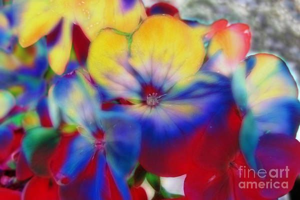 Photograph - Abstract Flowes 01 by Brian Roscorla