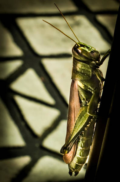 Something Different Photograph - Abstract Grasshopper by Karen Wiles