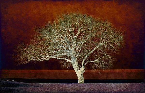 Photograph - Abstract Nature by Milena Ilieva