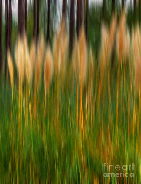 Photograph - Abstract Of Movement by Dave Bosse