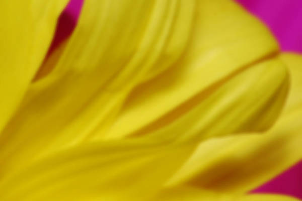 Photograph - Abstract Petals by Larah McElroy