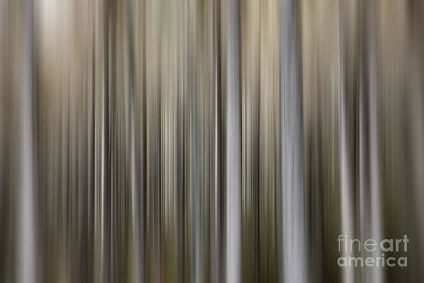 Wall Art - Photograph - Pine Forest by Rod McLean
