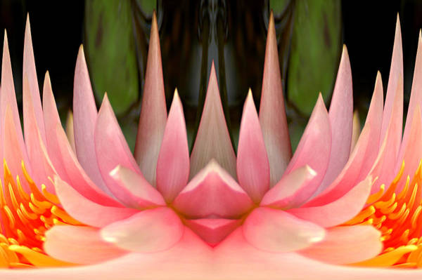 Don Johnson Photograph - Abstract Pink Water Lily by Don Johnson