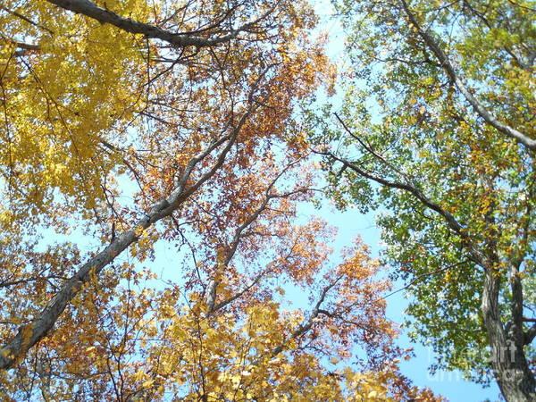 Rowena Photograph - Abstracted Autumn Leaves I I by Rowena Throckmorton