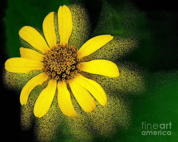 Photograph - Abstracted Flower by Michael Arend