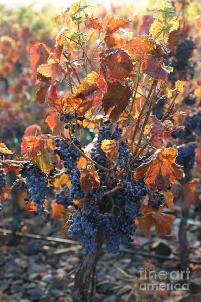 Wall Art - Photograph - Abundant Harvest by Carol Groenen