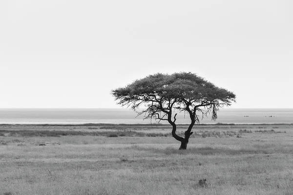 White Wolf Photograph - Acacia, In The Back The Etosha Pan by Moritz Wolf