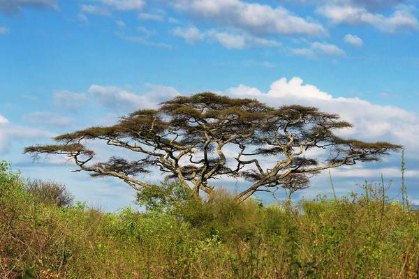 Lakes Region Photograph - Acacia Tree In Abijatta-shalla Lakes by Keren Su